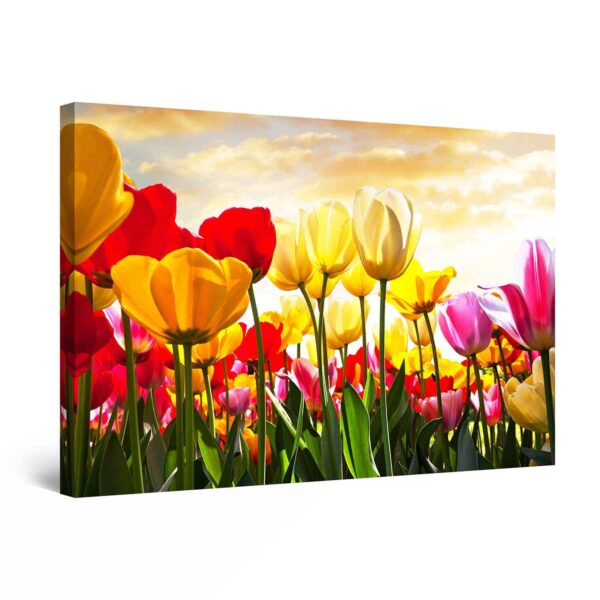 Canvas Wall Art - Field of Multicolored Tulip Flowers Painting