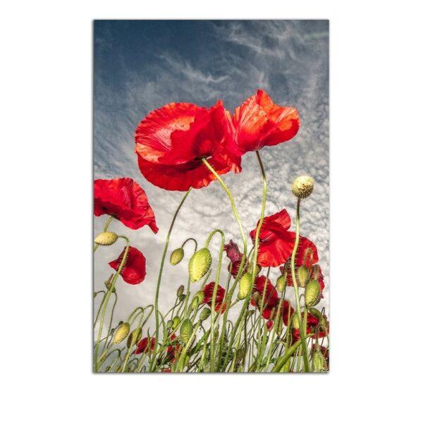 Plexiglass Wall Art - Poppies in the Field Decor  60 x 90 CM