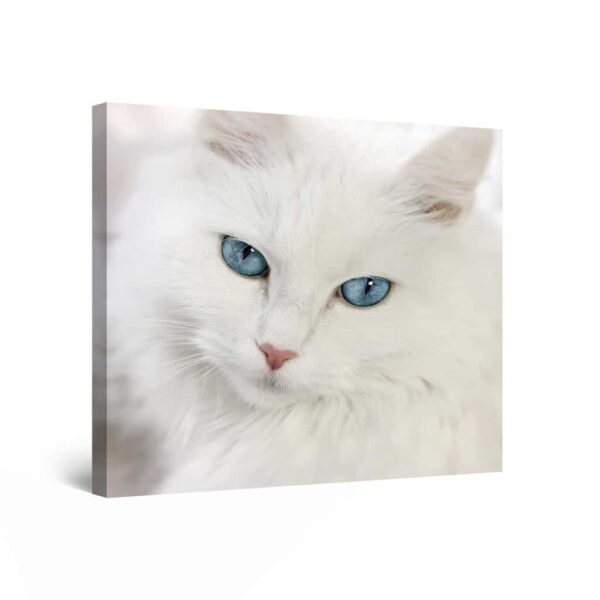 Canvas Wall Art Abstract - White Cat 80 x 80 cm