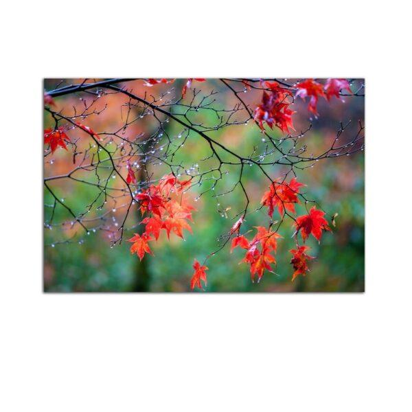 Plexiglass Wall Art - Dew on Red Leaves Decor  60 x 90 CM