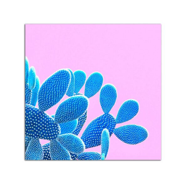 Plexiglass Wall Art - Blue Cactus on Pink Decor 60 x 60 CM